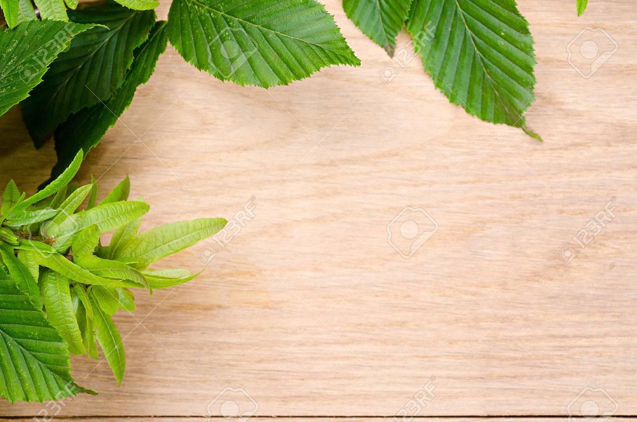 chêne naturel texture de bois et charme feuilles vertes banque d