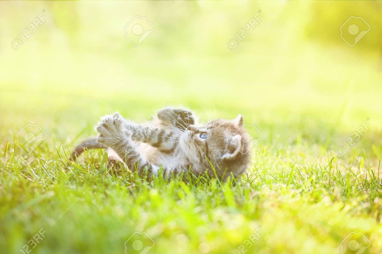 Image result for sunny kitten
