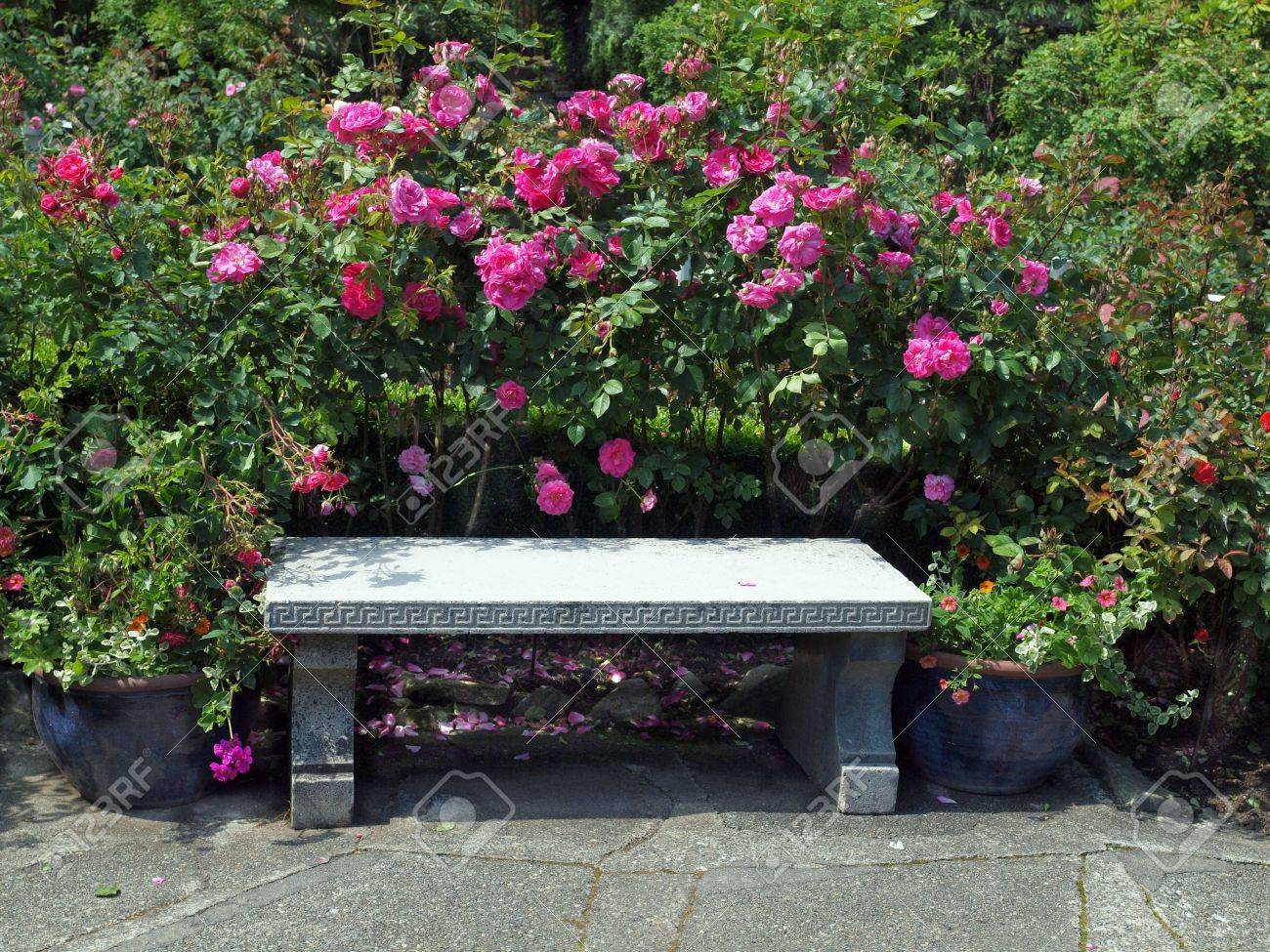Concrete Bench In The Rose Garden Stock Photo, Picture And Royalty