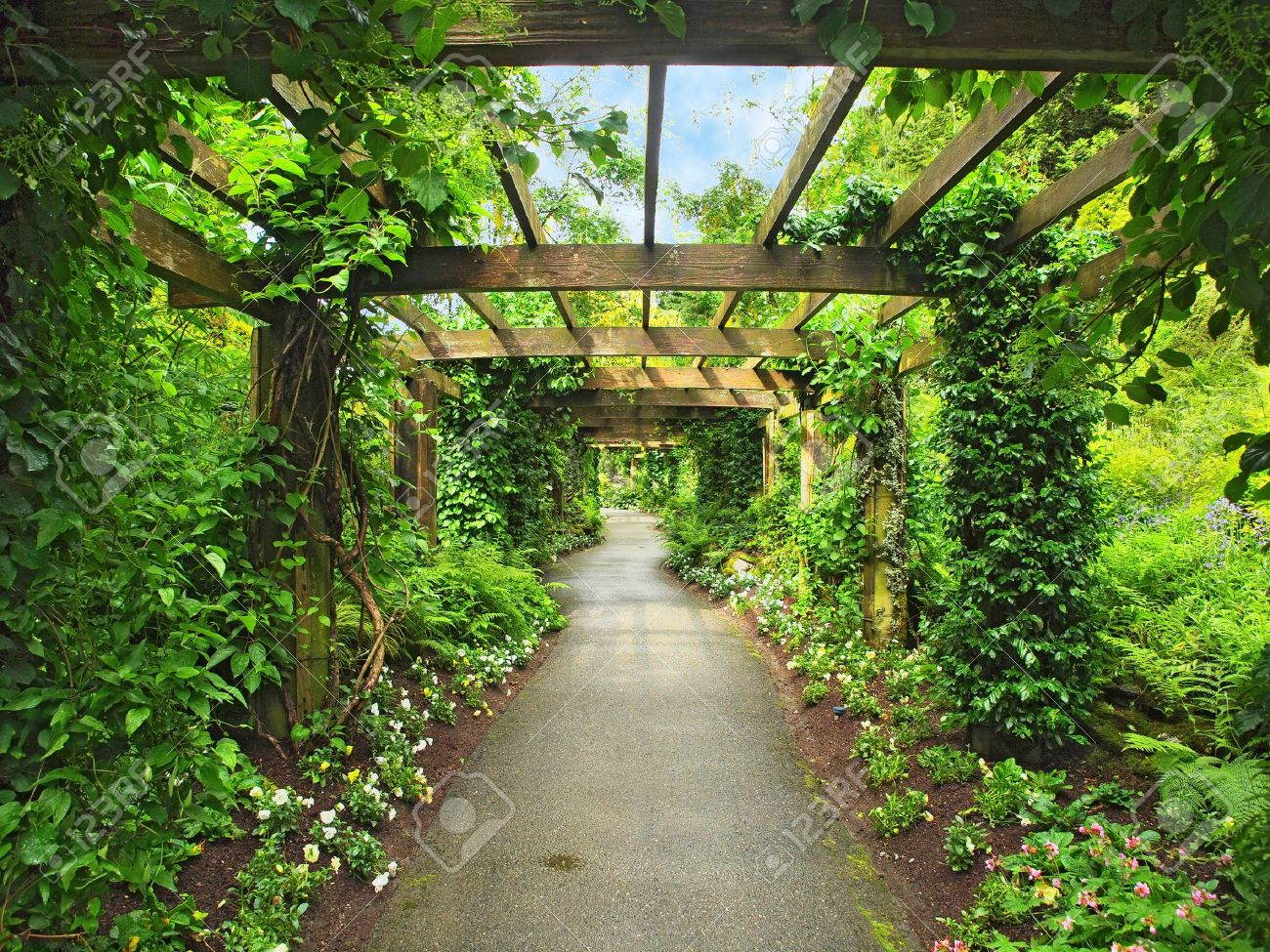Pergola passage in the garden, surrounded by wisteria and climbing plants  Stock Photo - 14135962 - Pergola Passage In The Garden, Surrounded By Wisteria And Climbing