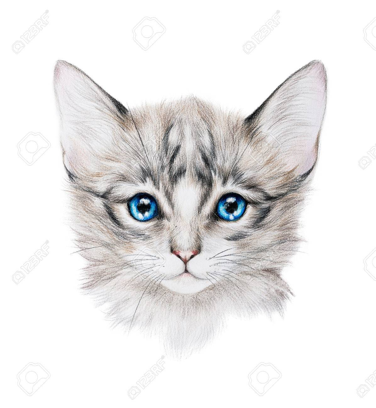Pencil portrait of a small grey kitten with bright blue eyes