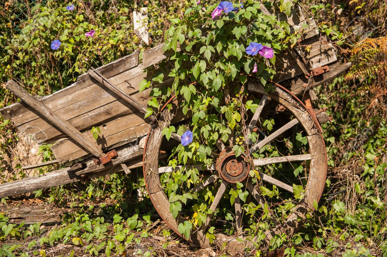Vintage Decorative Wagon In The Garden, Covered With Green Plants ...