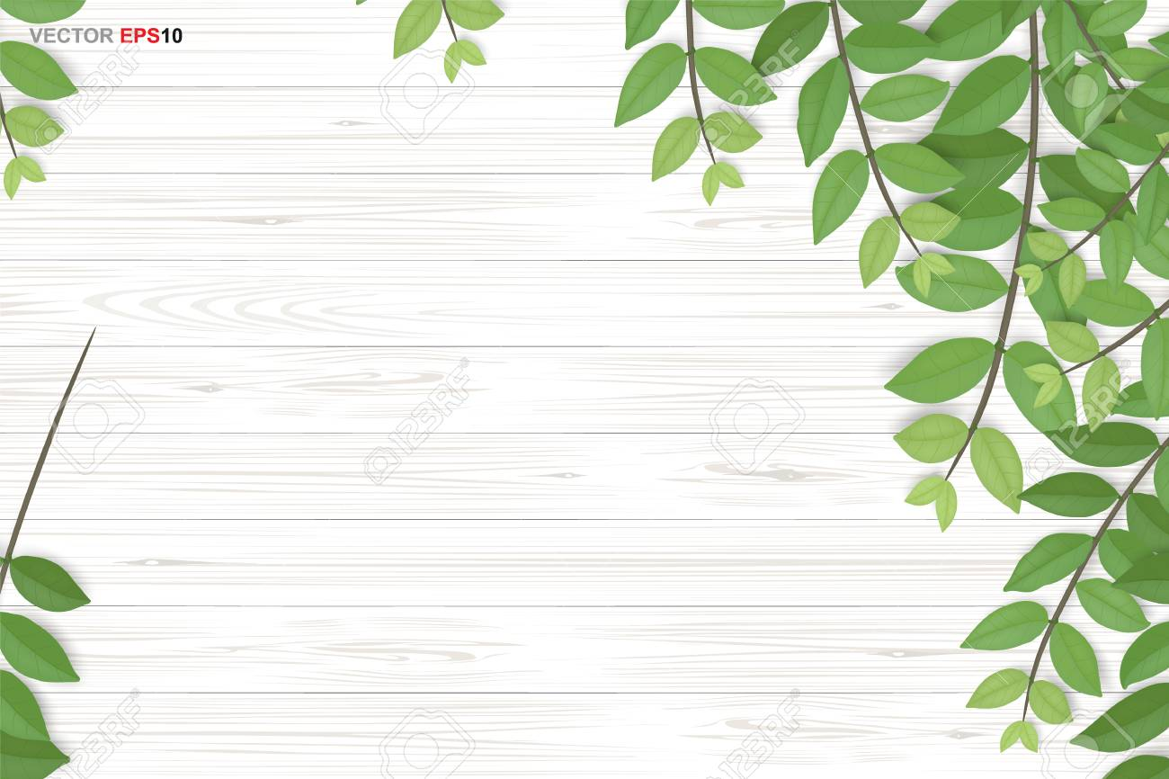 Wood texture background with green leaves. Realistic vector illustration. - 114967331