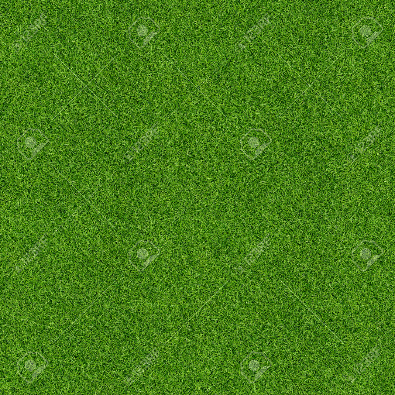 Green grass pattern and texture for background. Close-up image. - 121373189