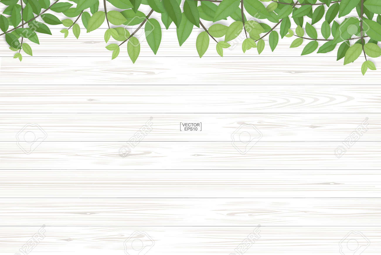 Wood texture background with green leaves. Realistic vector illustration. - 155949132