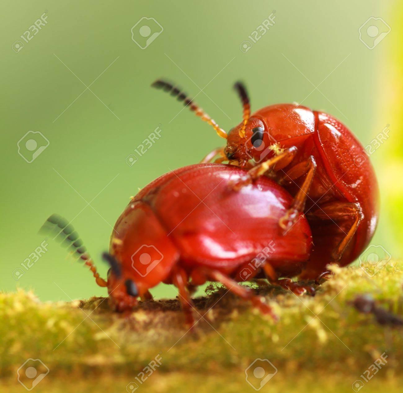 Orange Käfer Arten In Der Natur Oder Im Garten Lizenzfreie Fotos