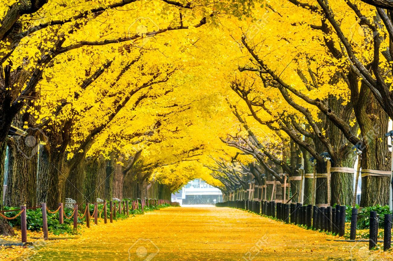 Japan yellow