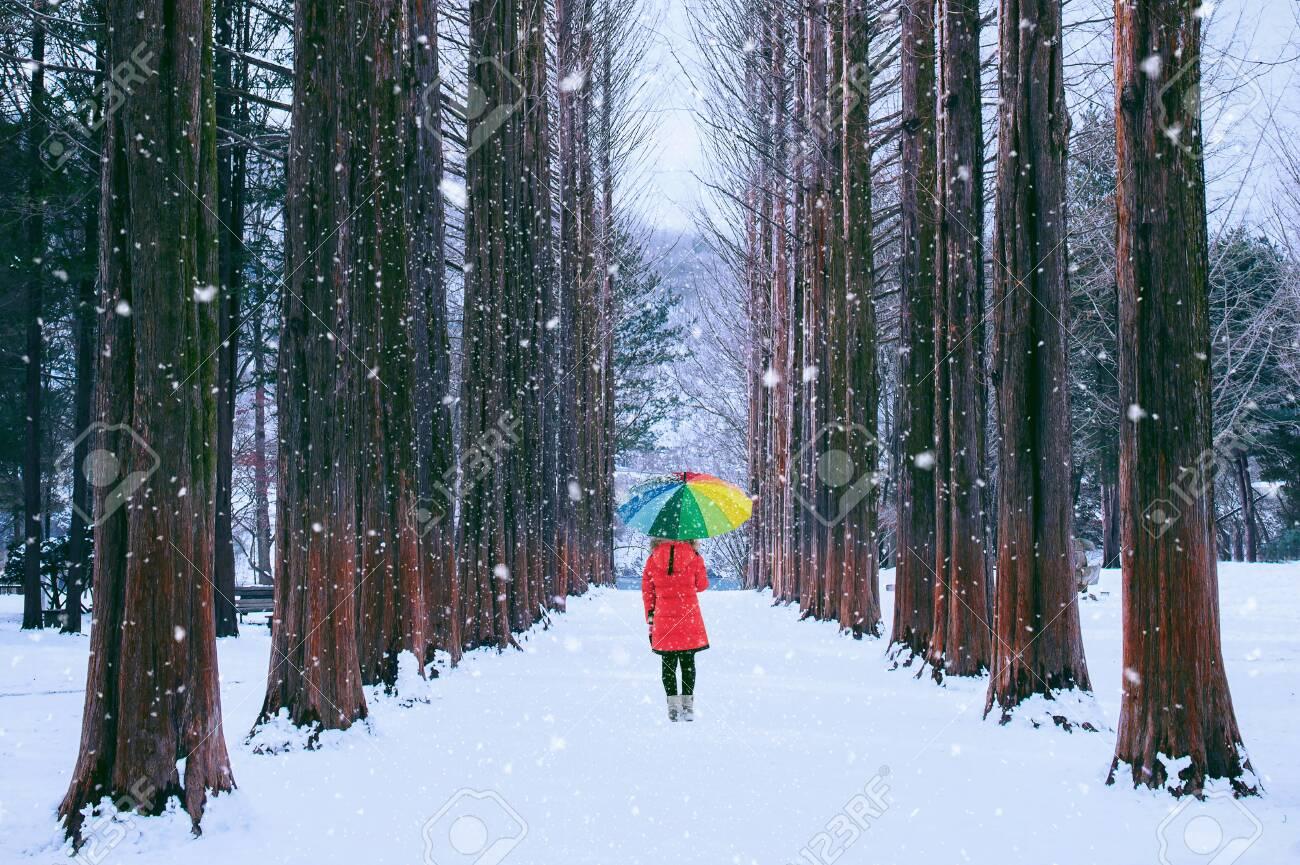 Girl with colourful umbrella in row tree, Nami island in South Korea. Winter in South Korea. - 117685055
