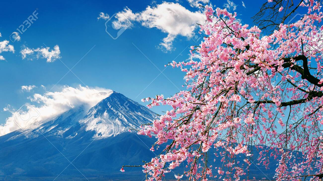 Fuji mountain and cherry blossoms in spring, Japan. - 128429026
