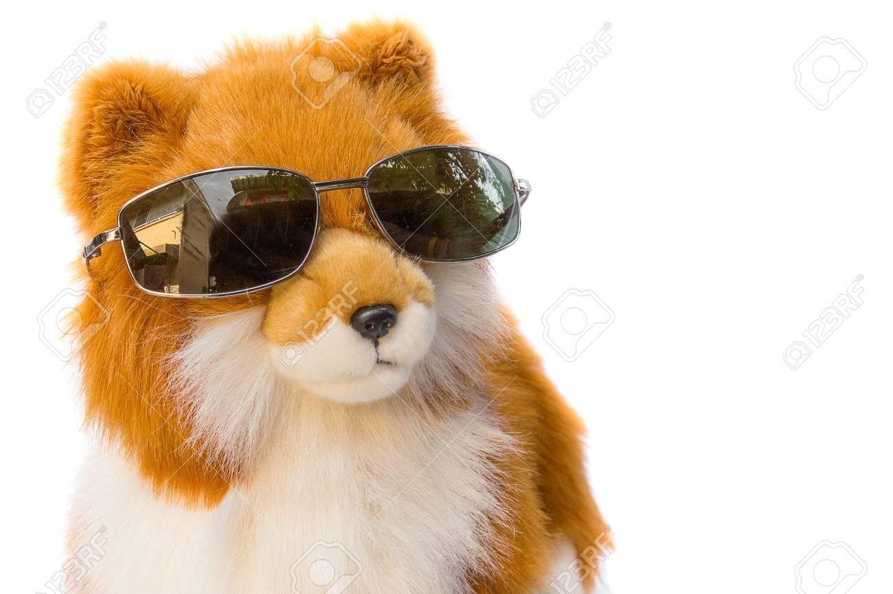 ff7b97160c Foto de archivo - Perro de la muñeca con gafas de sol sobre fondo blanco