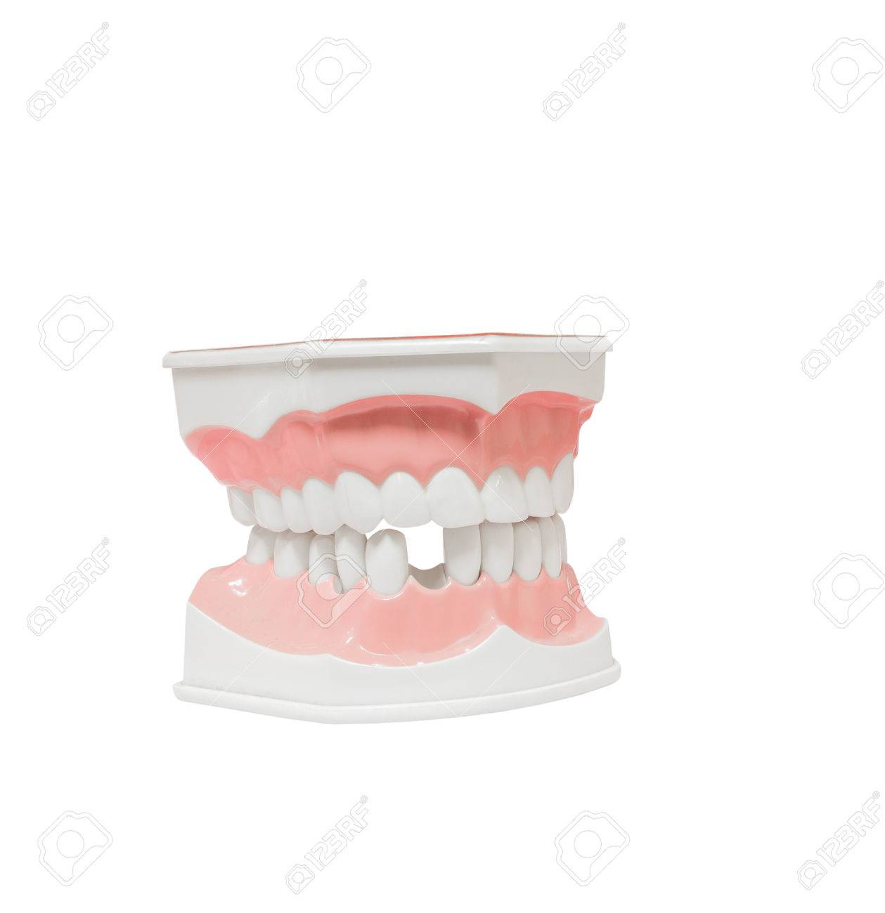 Tolle Zähne Anatomie Namen Fotos - Anatomie Von Menschlichen ...
