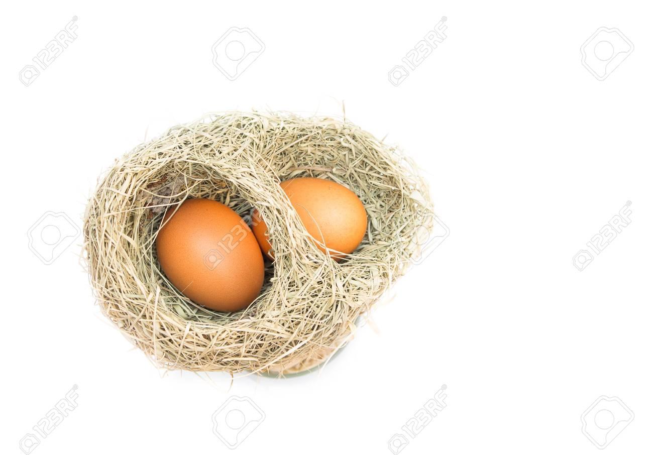 Skylark Nests And Egg Close Up Baya Weaver Bird Nest Skylark