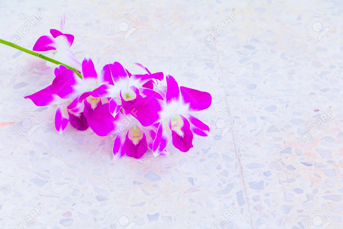 Purple Orchid Bouquet Flower Beautiful On Terrazzo Floor Background