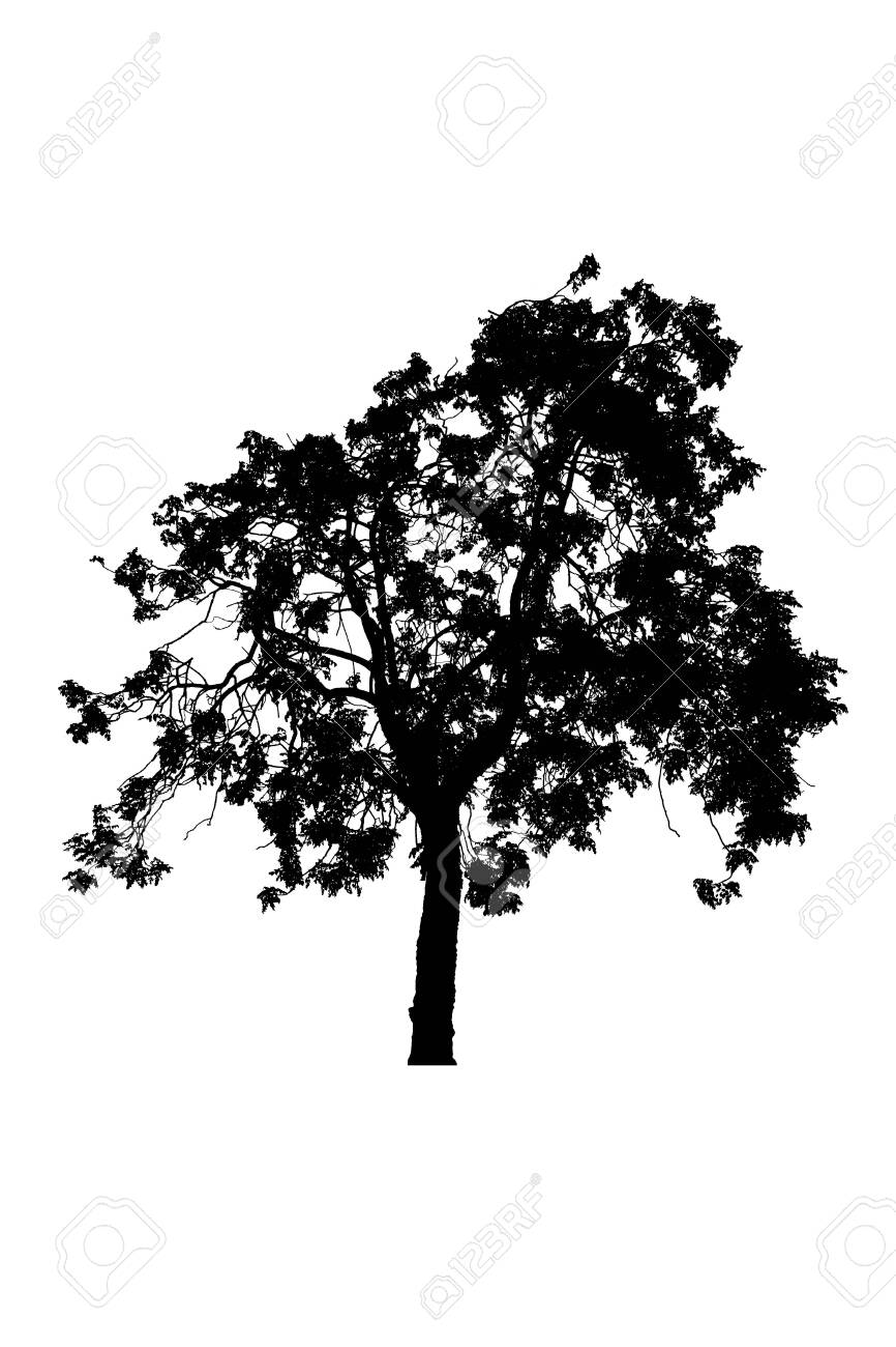 tree silhouettes beautiful isolated on white background - 147566200