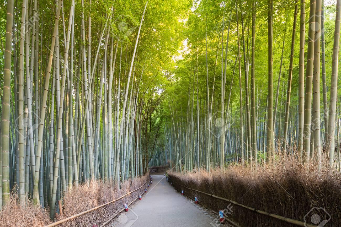Gruner Bambuswald Arashiyama Und Gehende Methode In Kyoto Japan