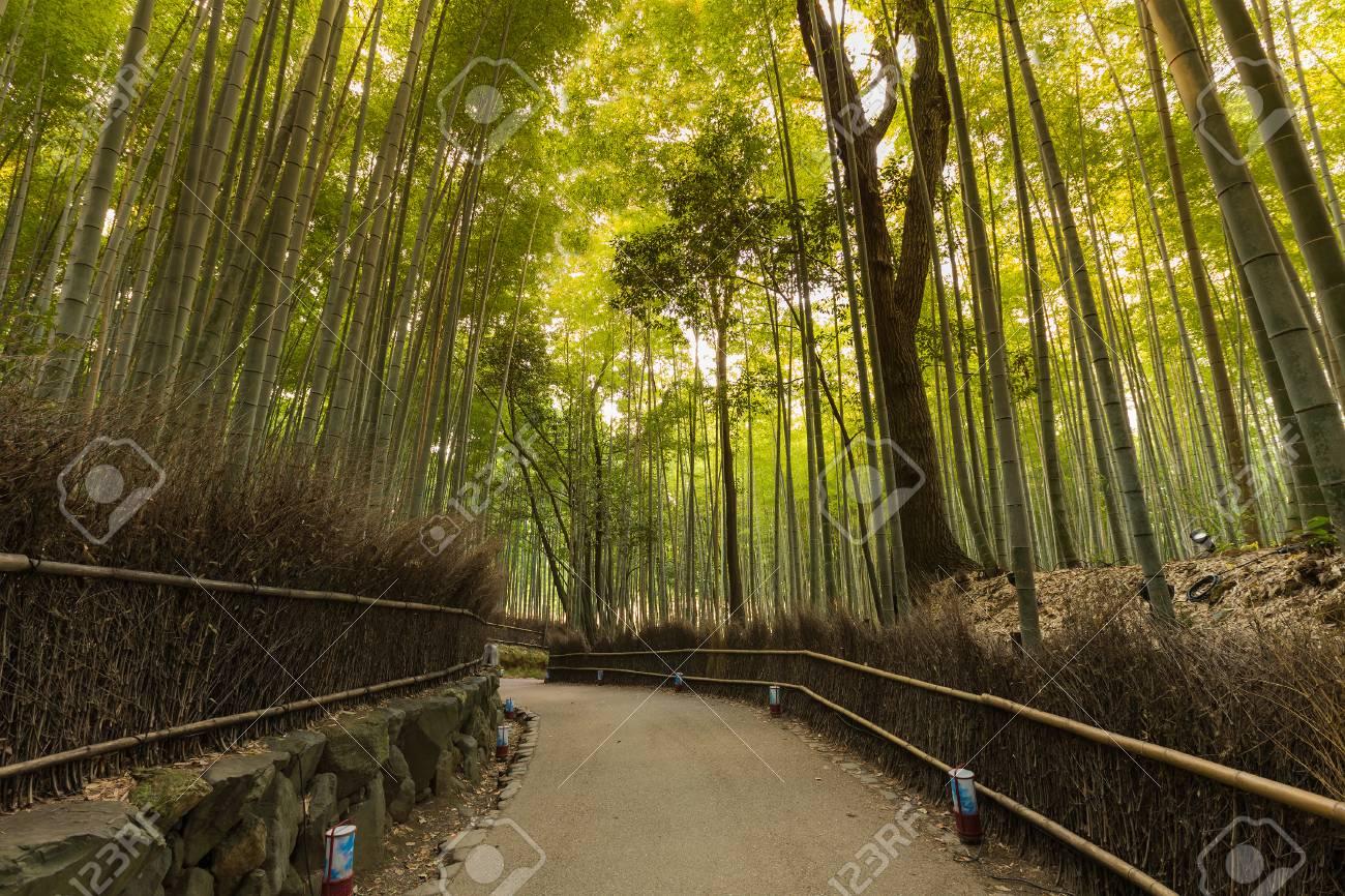Gehender Pass Zum Bambuswald Arashiyama Kyoto Japan Gruner
