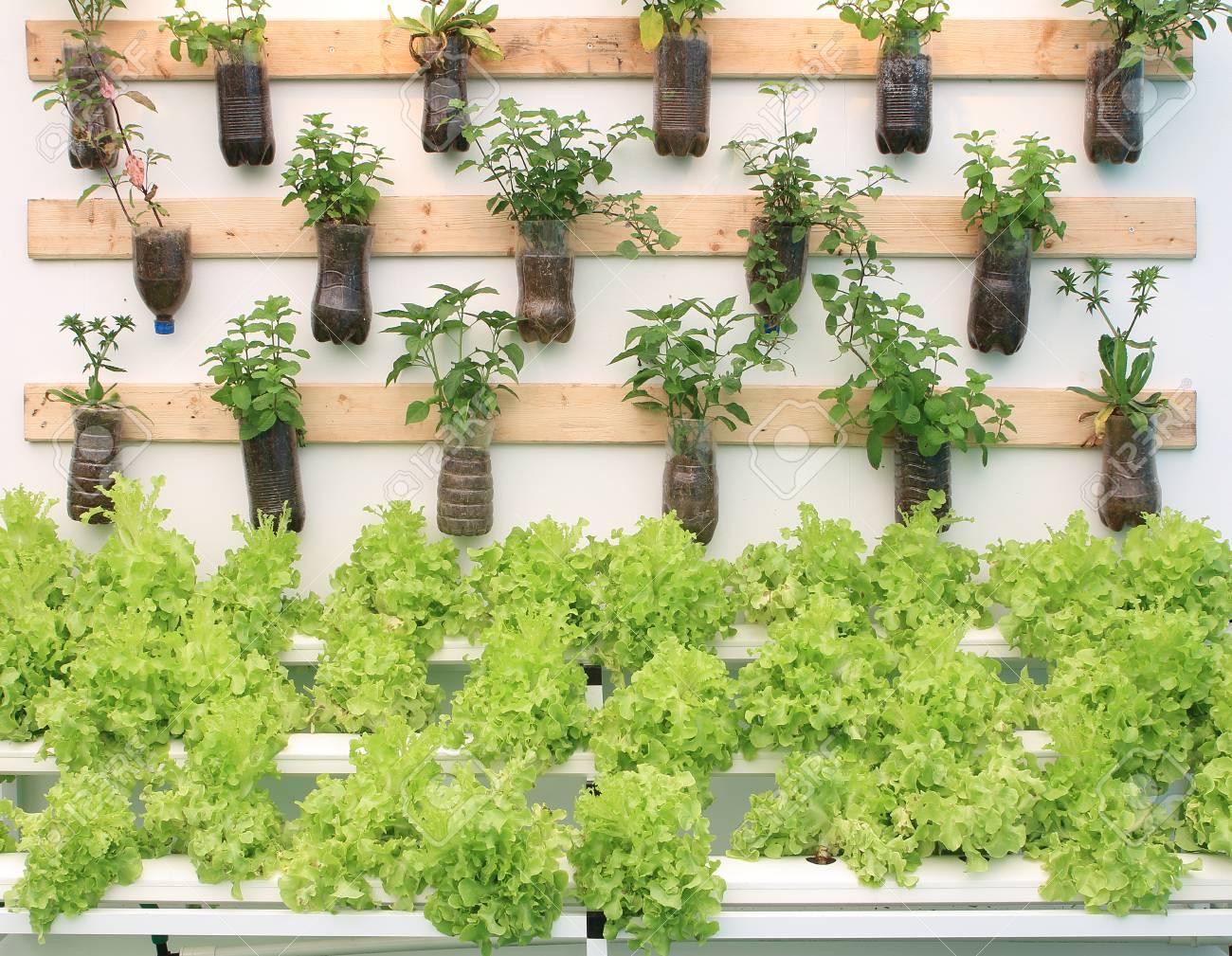Beliebt Bevorzugt Pflanzen Kräuter In Töpfen An Die Wand Hängen. Lizenzfreie Fotos &US_73