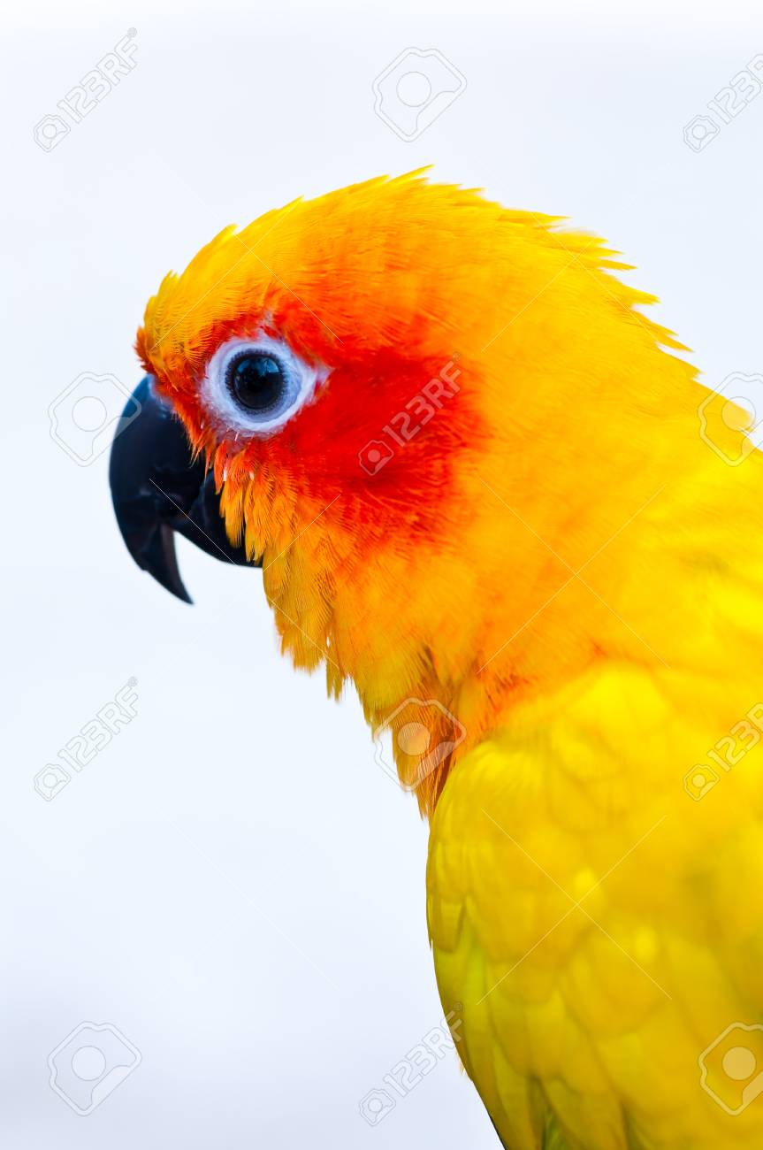 Colorful parrots head closeup shot isolated on white Stock Photo - 14236193