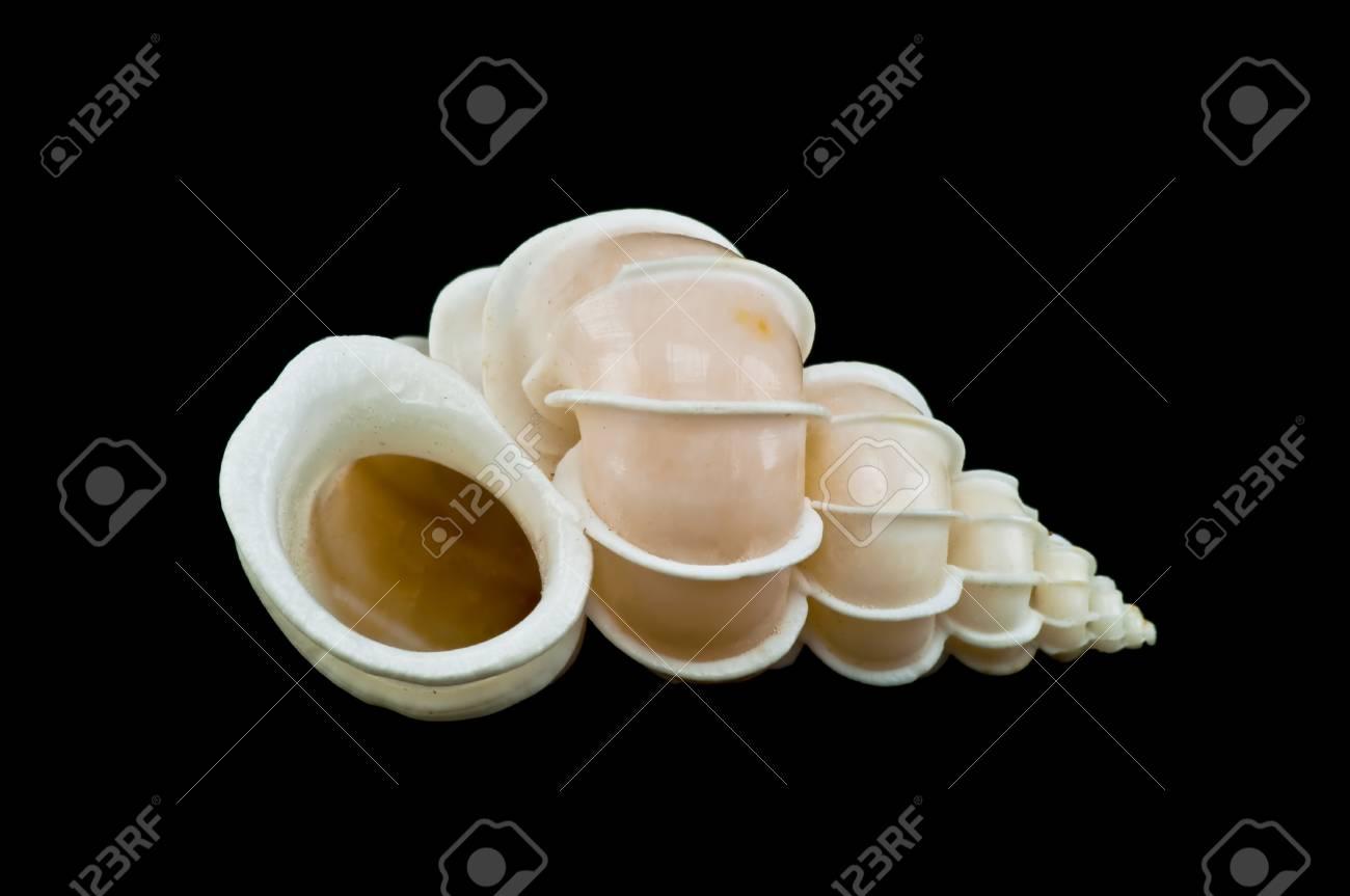 sea shell  isolated on black background Stock Photo - 14754754