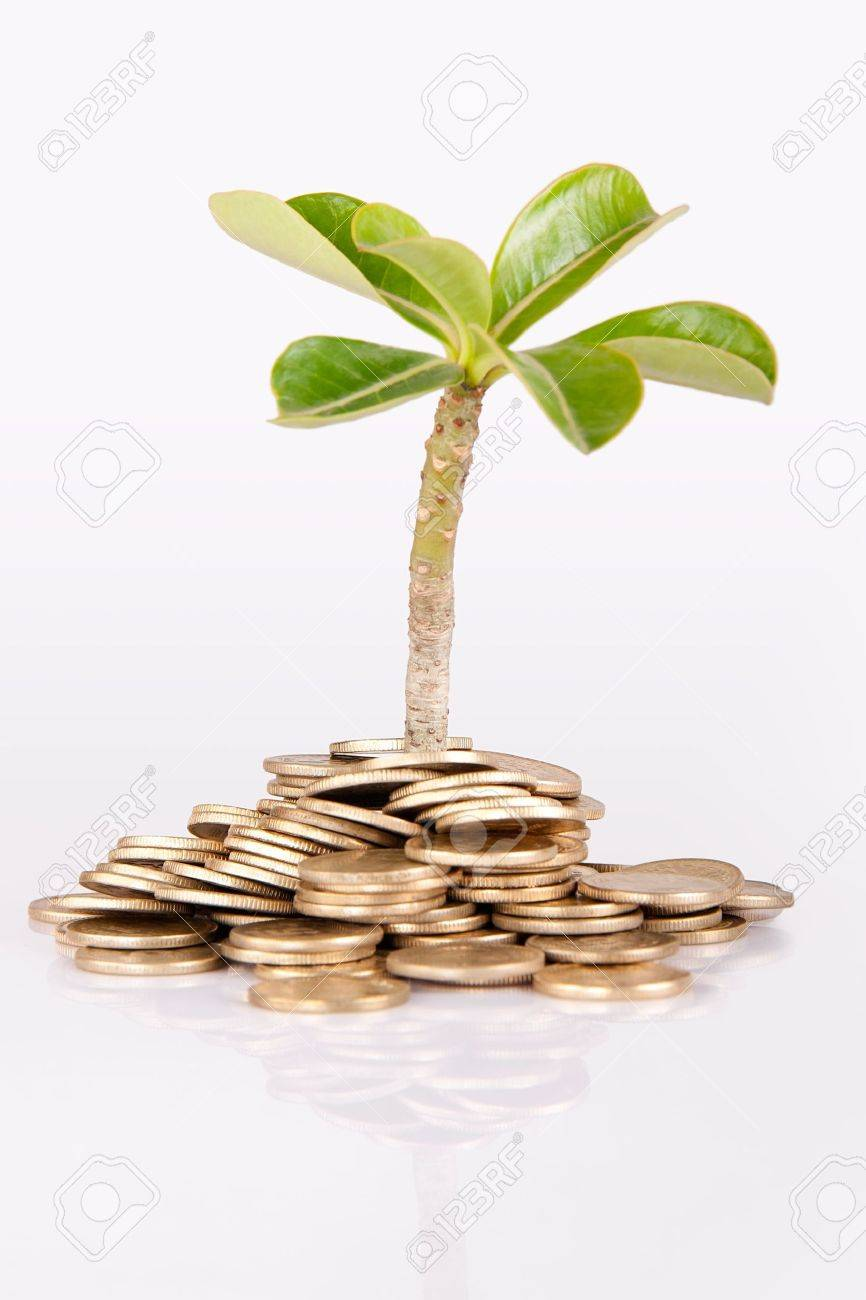 Pile of money  indian coin   isolated on white background under tree or plant Stock Photo - 14306471