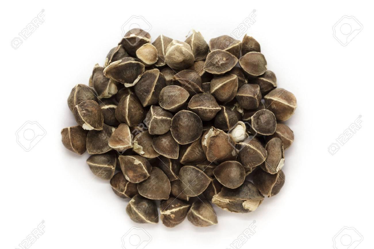 Organic Wingless Moringa (Moringa oleifera) seeds isolated on