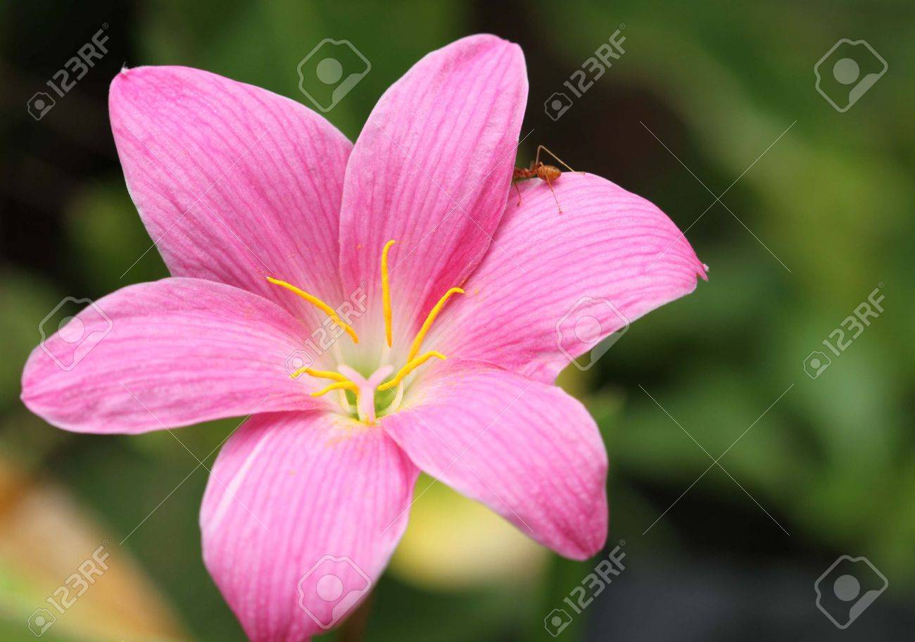 Orchid in thailand Stock Photo - 13758669