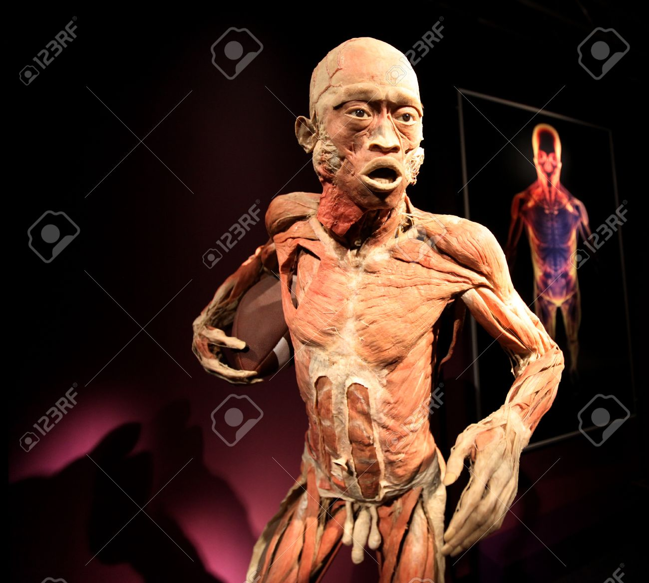 Krakow Poland March 11 2013 The Human Body Exhibition The