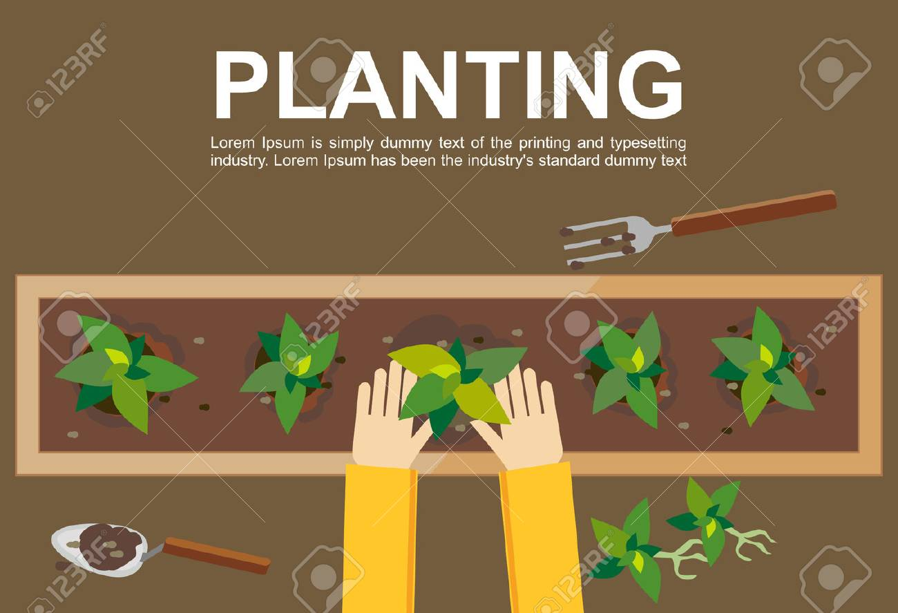 Planting illustration. Planting concept. Flat design illustration concepts for working farming harvesting gardening architectural seeding cultivate go green. - 41627499