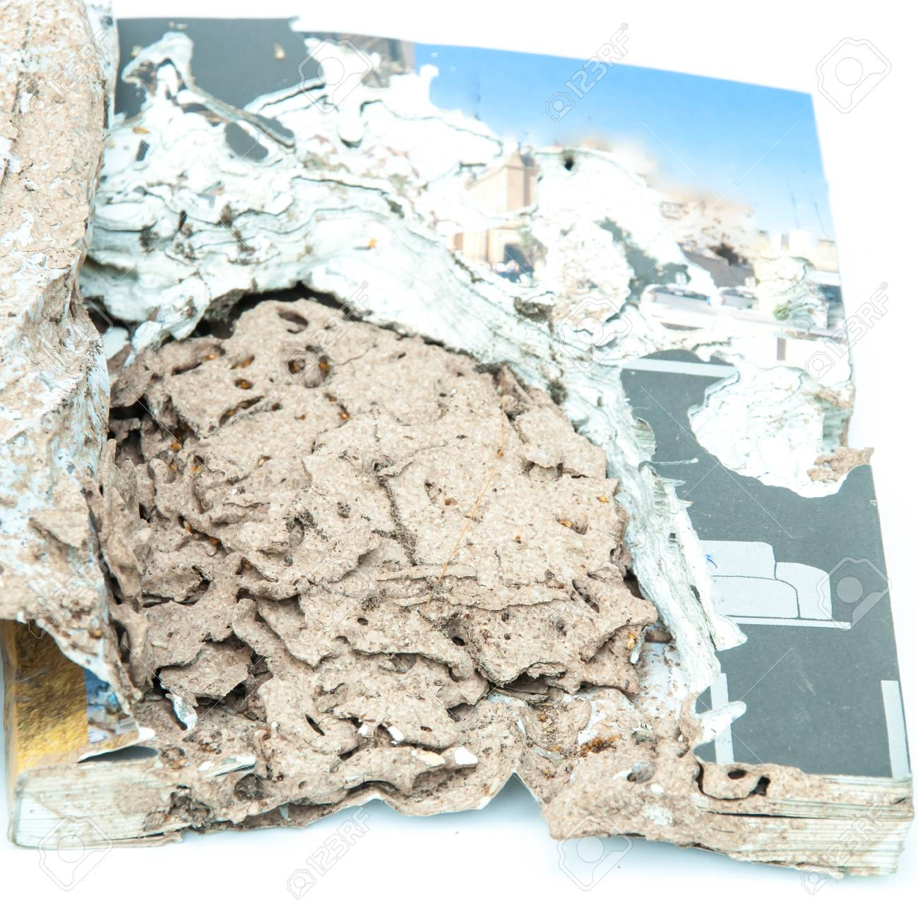Close up damaged paper eaten by termite - 48659572