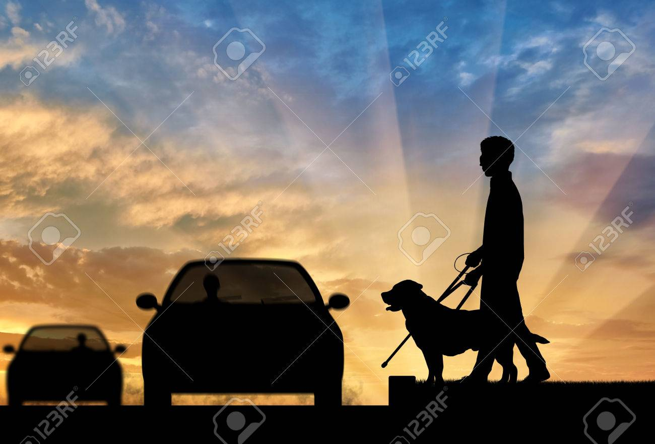 76f5d9fe4a Blind man disabilities with cane and dog guide cross road in front of car  sunset.