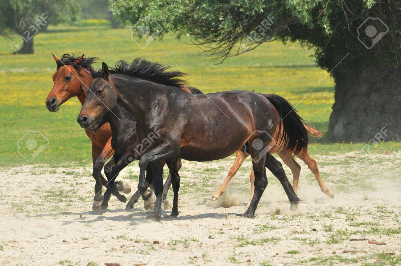 galloping horse pastures Stock Photo - 10833098
