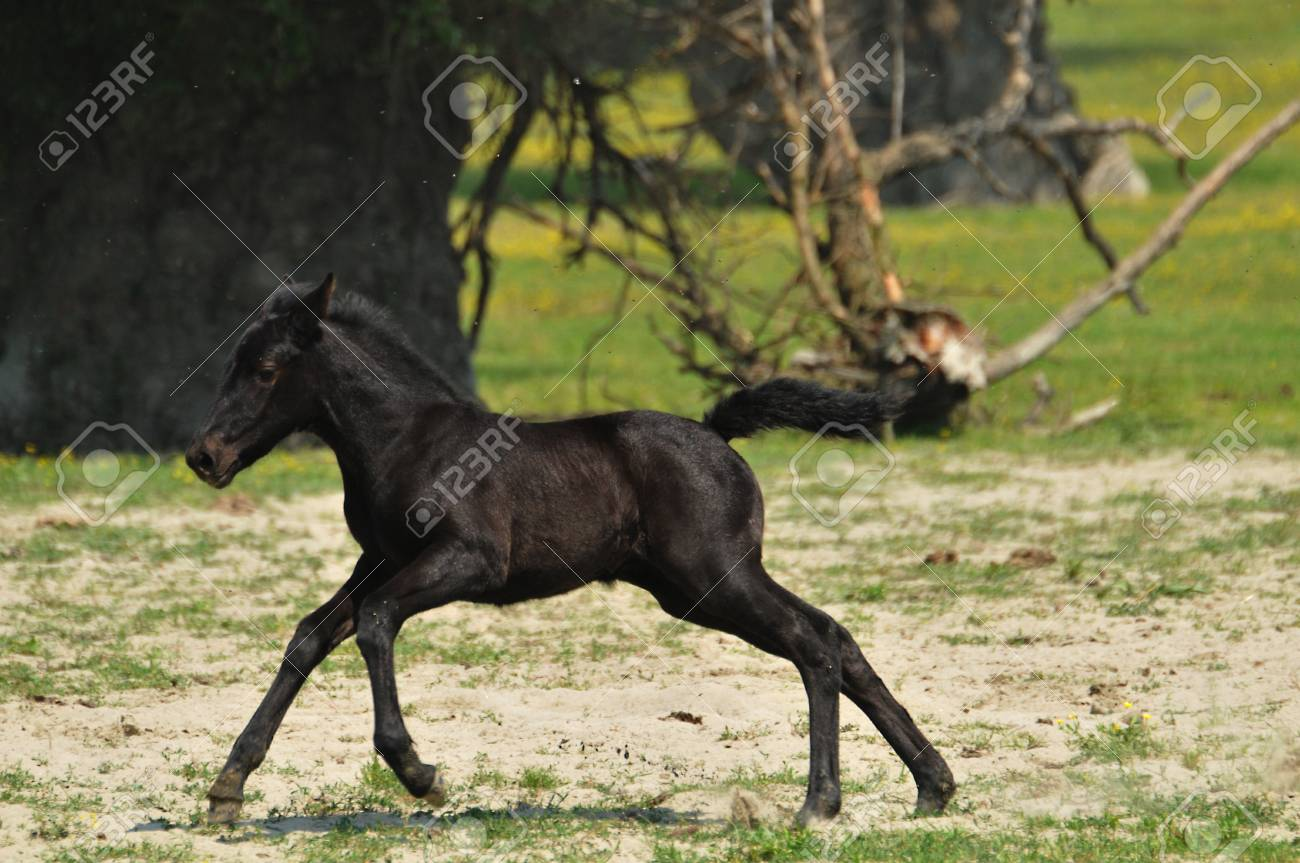 foal in pasture Stock Photo - 10833090