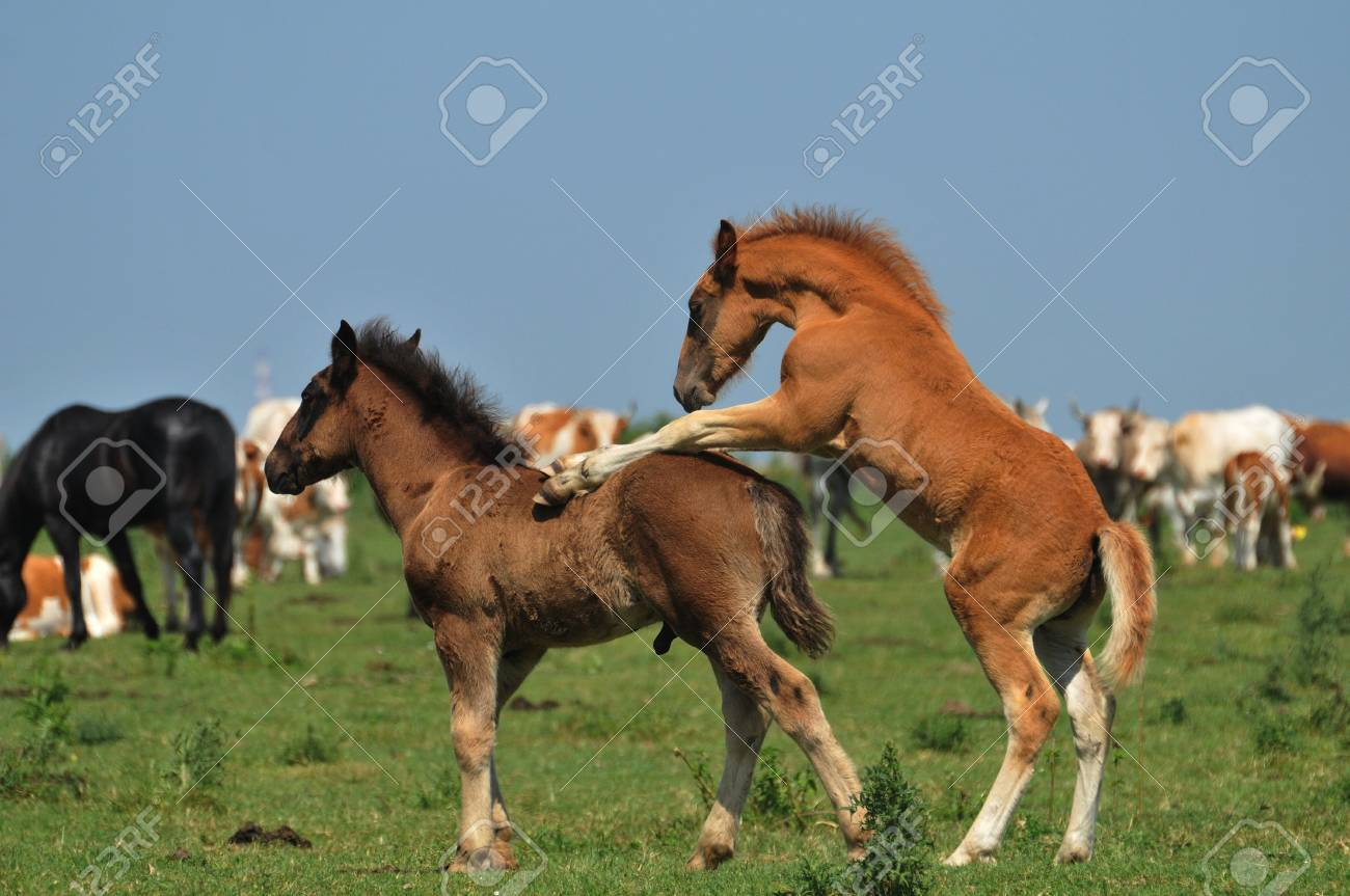 foals in pasture Stock Photo - 10833133