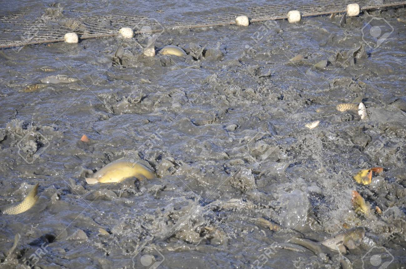 carp fishing Stock Photo - 18714103