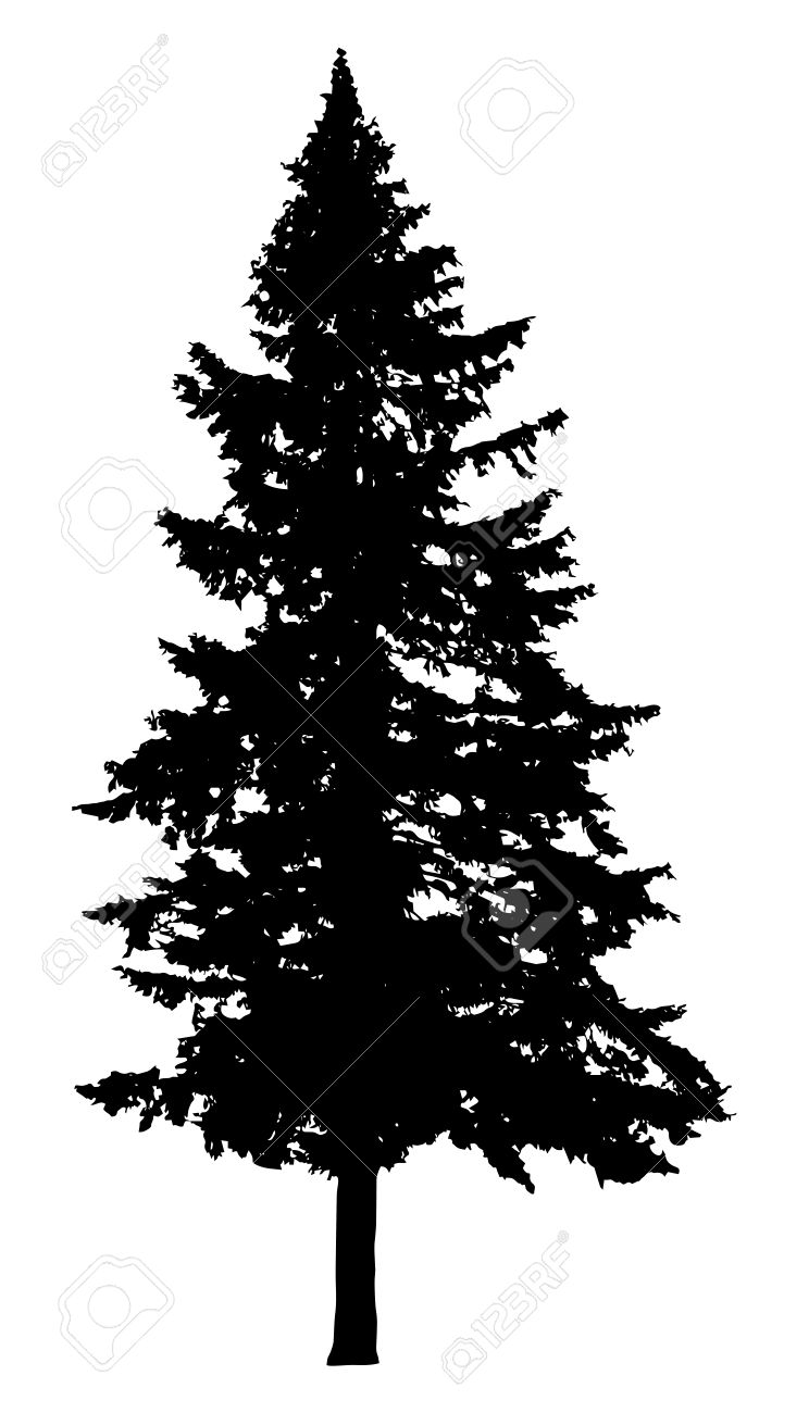 Pine Tree Silhouette Isolated On White Background Royalty Free Cliparts Vectors And Stock Illustration Image 49157391