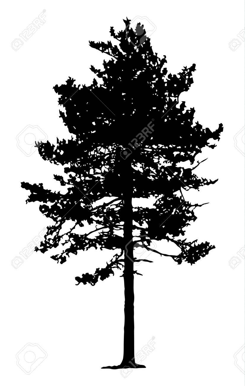 Pine Tree Silhouette - 52119500