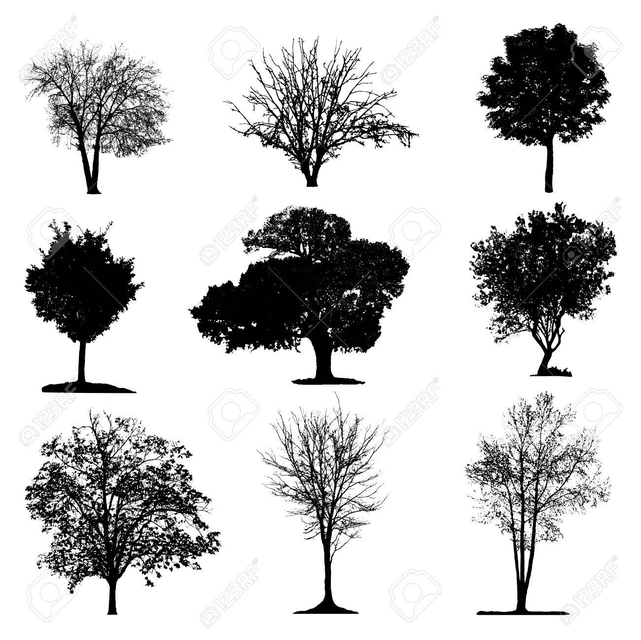 Trees silhouette collection - 53221587