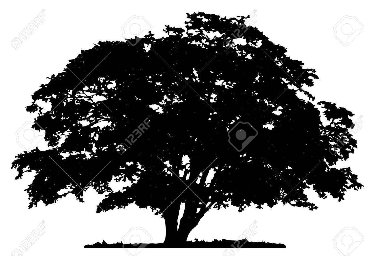 Tree silhouette on white background - 55999251