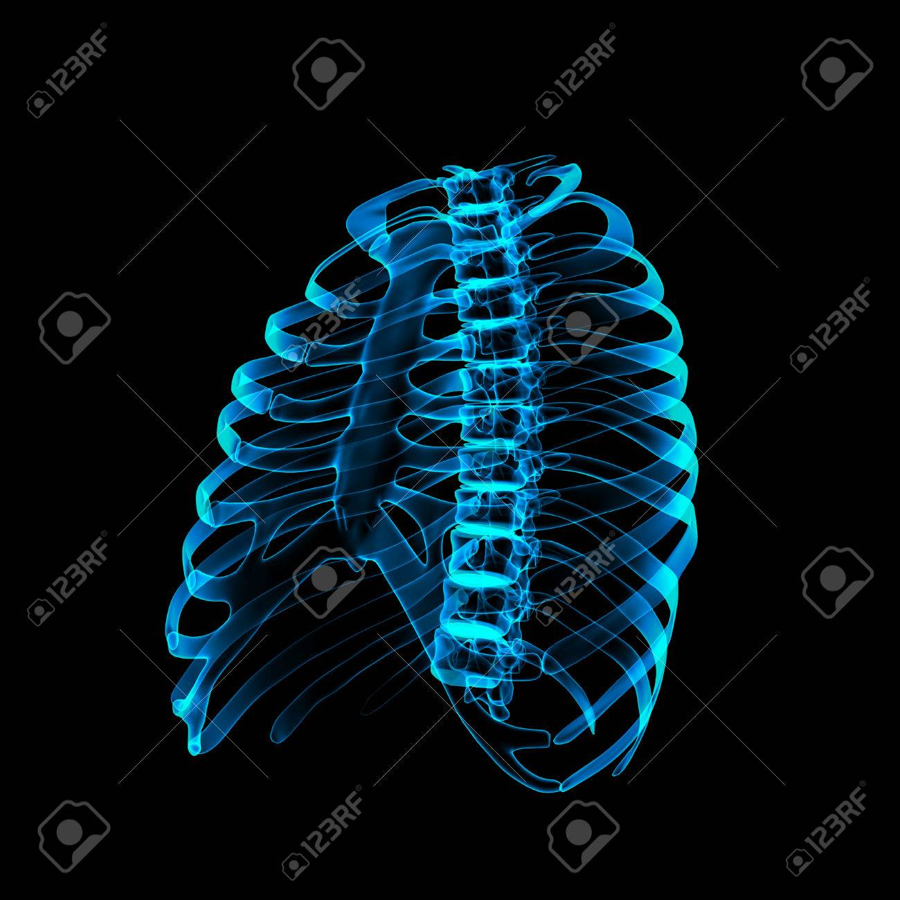 Thoracic Spine X Rays Under 3d Image Stock Photo Picture And