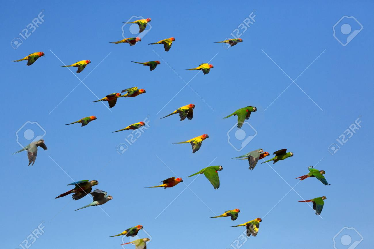 small colorful birds flying in the sky stock photo picture and