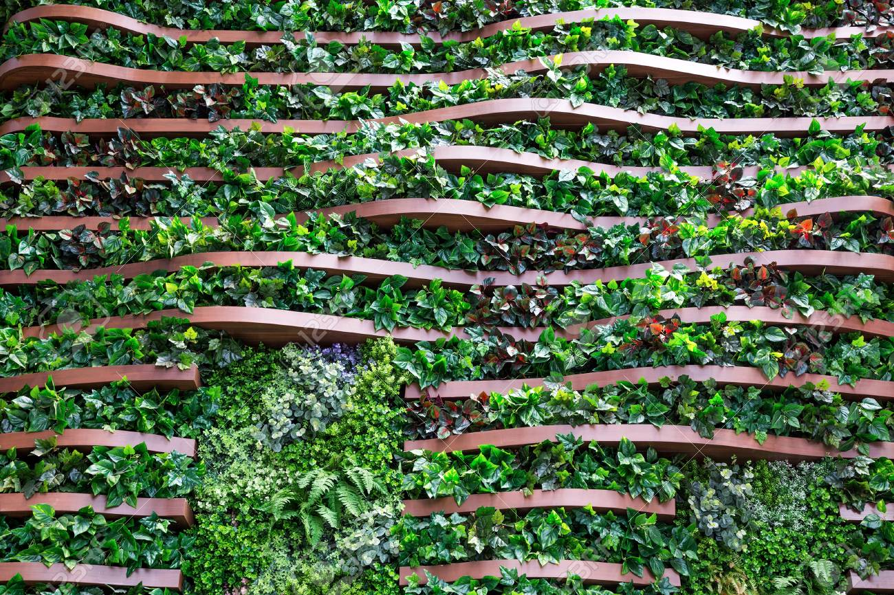 Vertical Garden Decoration On Wooden Wall Stock Photo Picture And Royalty Free Image Image 107206317