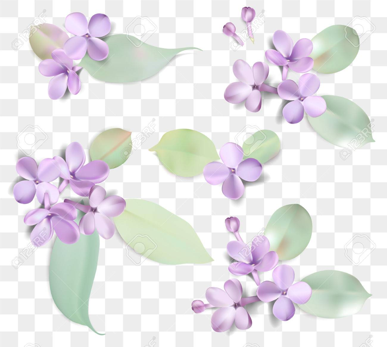 Soft Pastel Color Floral Group Isolated On Transparent Background Purple Lilac Flowers And Petals Watercolor