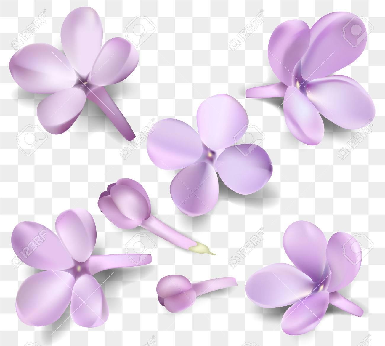 ソフト パステル カラー花コレクションは、透明な背景に分離されました