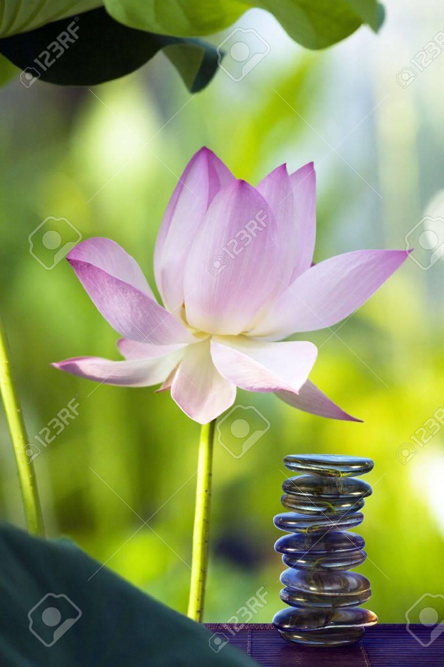 Lotus in habitat and spa stones Stock Photo - 9161369