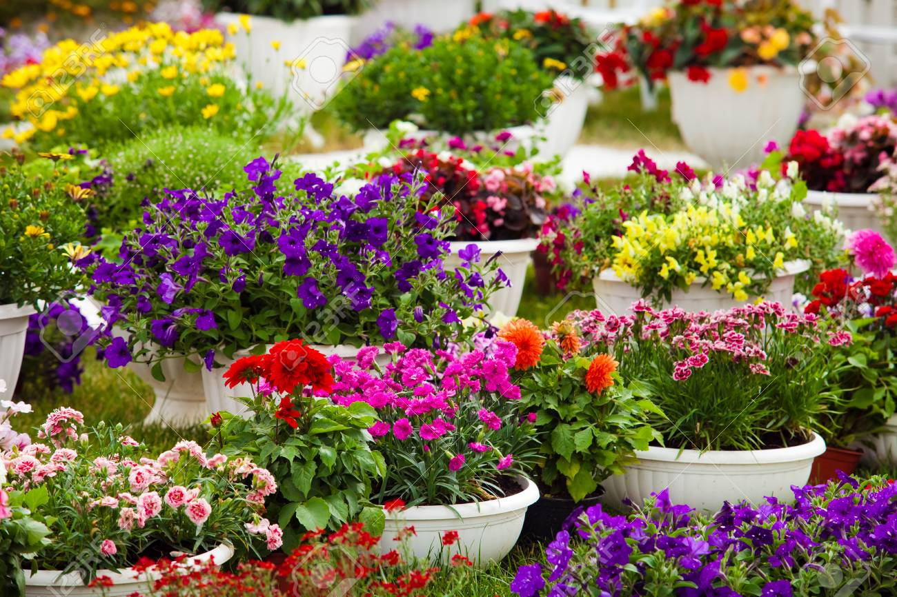 Different kinds of garden flowers in pots. Landscape design flowers. Colorful petunias in potflowers & Different Kinds Of Garden Flowers In Pots. Landscape Design Flowers ...