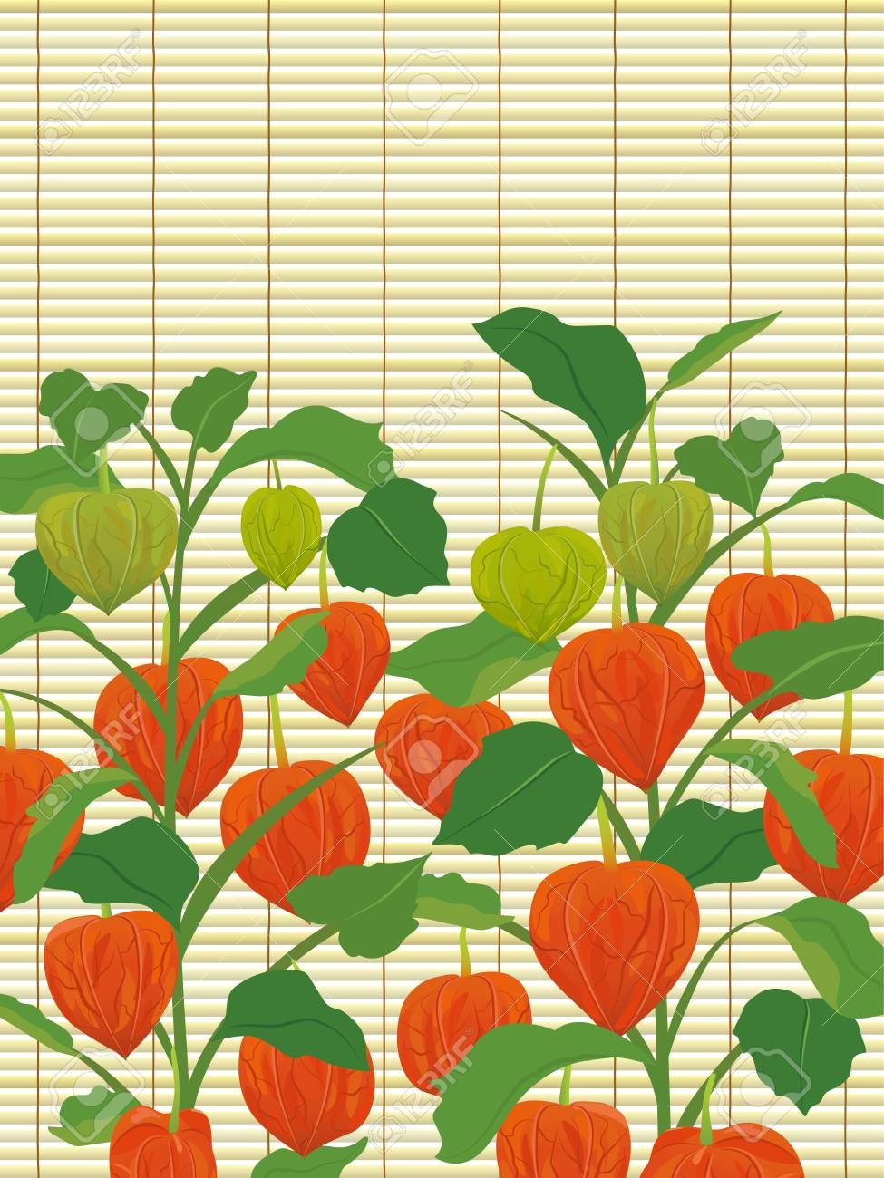 Chinese Lantern Plants And Bamboo Blind Frame Royalty Free Cliparts on chinese flying lanterns, lace aloe plant, chinese sky lanterns, chinese red plant, flowering maple plant, bleeding heart plant, chinese rain tree, verbena plant, rhododendron plant, baloon flower plant, climbing nightshade plant, chinese tomato plant, chinese paper lanterns, chinese money plant, bittersweet plant, foxglove plant, abutilon plant, bird of paradise plant, lupine plant, snapdragon plant,