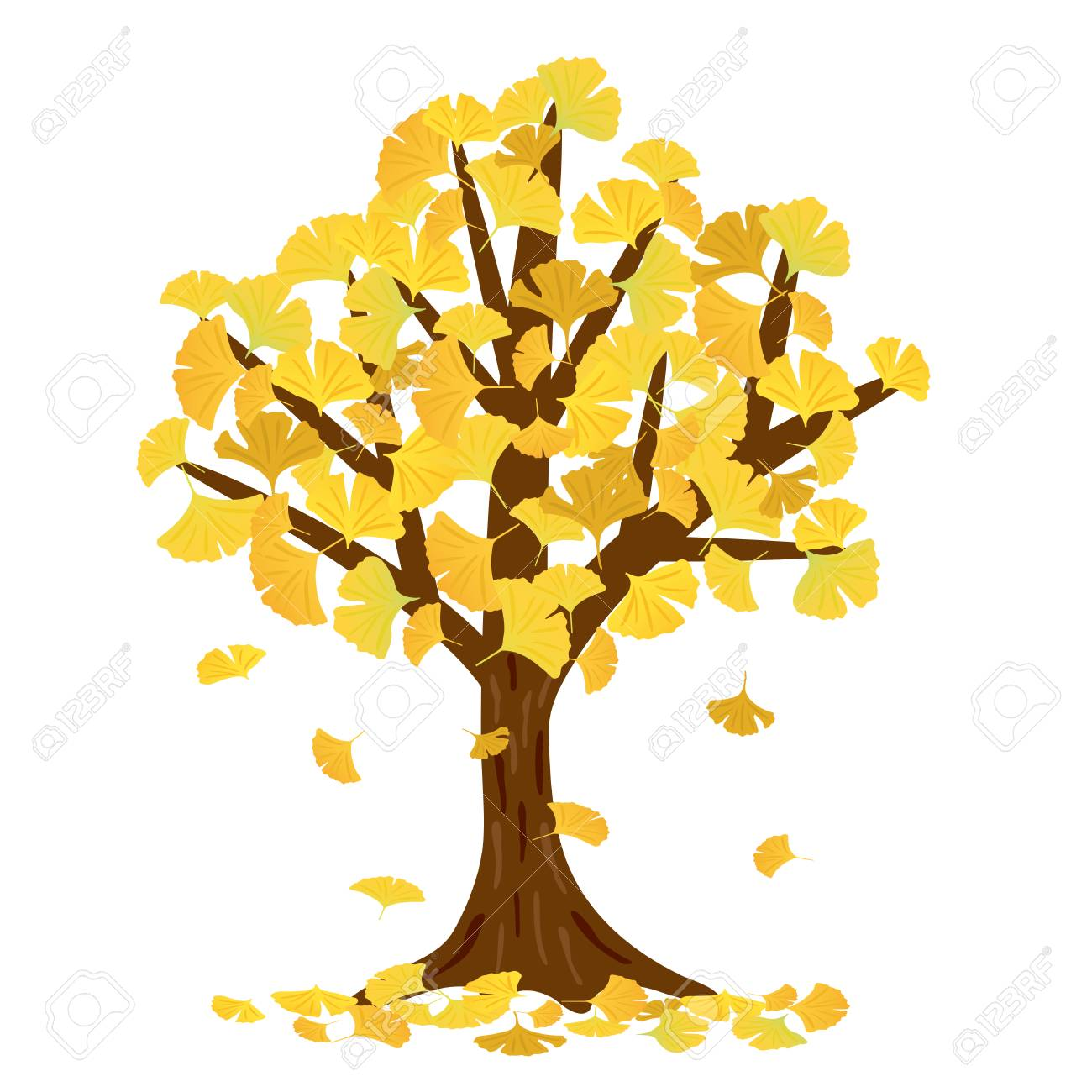 Ginkgo Tree Vector Illustration Royalty Free Cliparts, Vectors, And ...