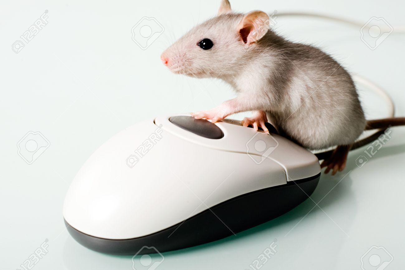 Image of small pet touching to the computer mouse Stock Photo - 8395145