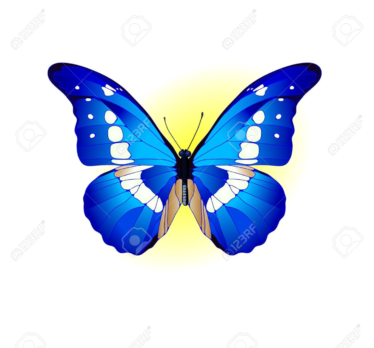 Vector illustration of beautiful blue butterfly Stock Vector - 9414787