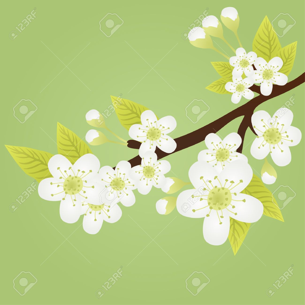 Vector illustration of apple-tree branch with flowers isolated on green Stock Vector - 9414976